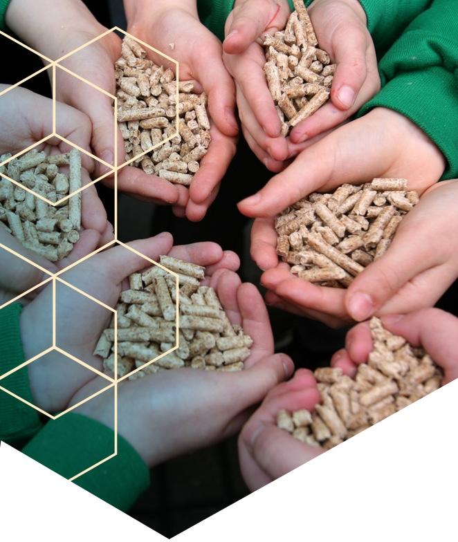 Solgetic Biomasa